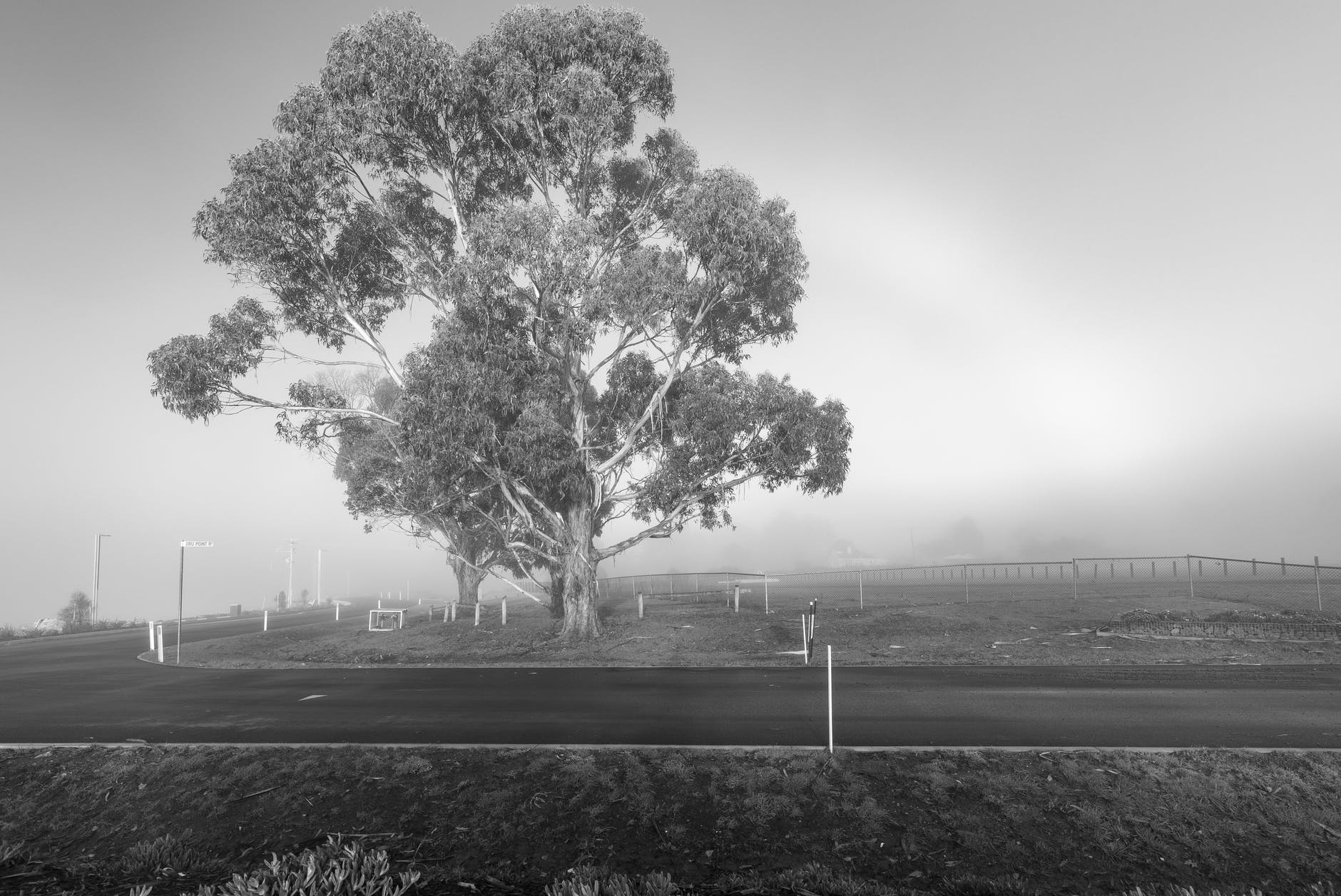 grayscale photo of tree and grass field